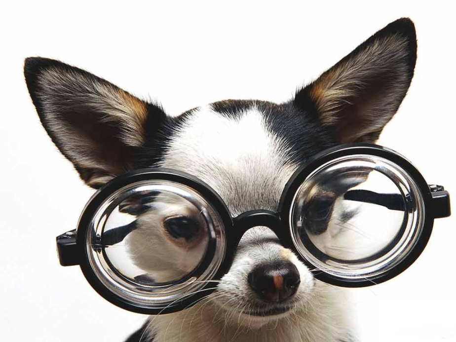 foto-cachorros-de-oculos-03